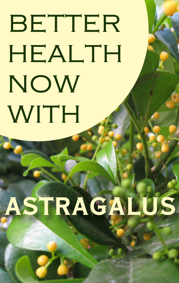 5 Amazing Health Benefits of Astragalus